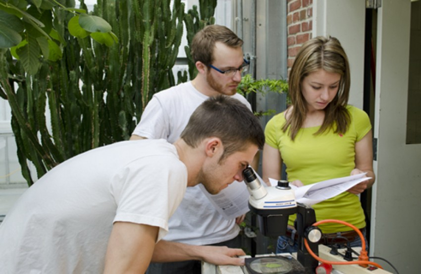 Will Derouin, Kevin Martini, and Alex Vosnitza research integrated pest management in Finch Greenhouse