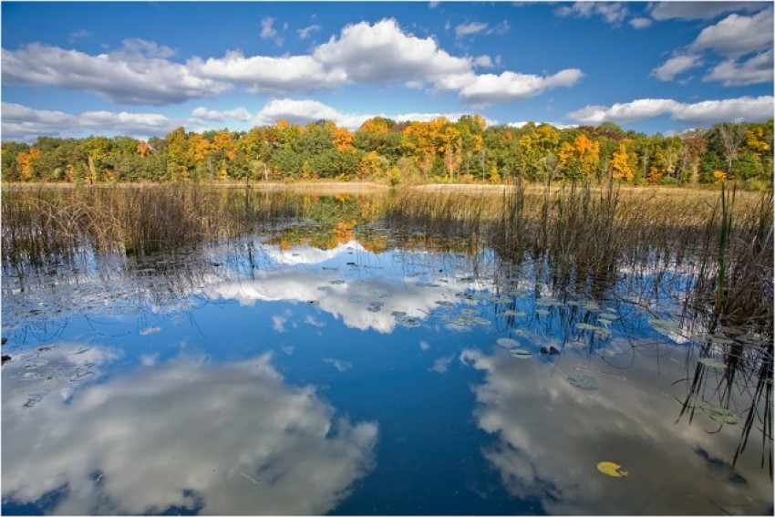 scenic view of a lake with reeds in the foreground and trees turning colors in the background over a blue, cloudy sky