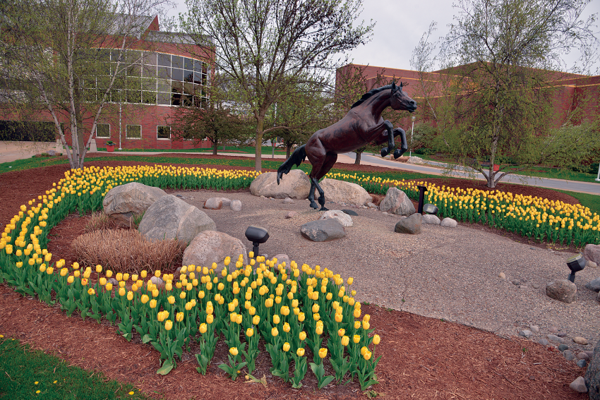 Outdoor campus photo of the bronco statue