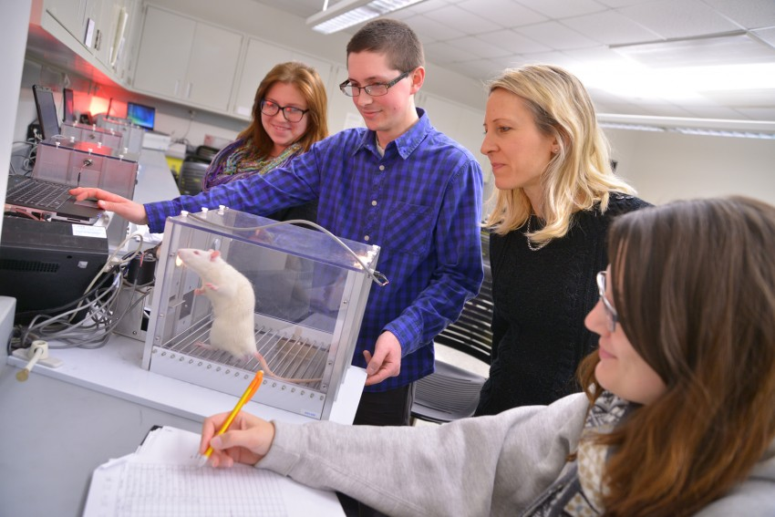 Students viewing rat in lab