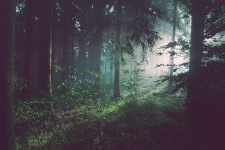Photograph of a forest by Sebastian Unrau.